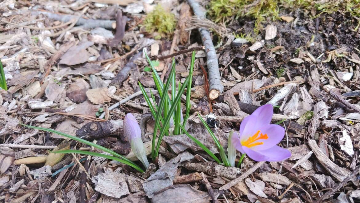 Disconnect to Reconnect: Spring Retreats